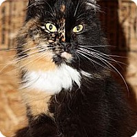 Adopt A Pet :: Sponsor Beautiful Mocha! - Halifax, NS