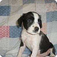 Adopt A Pet :: Uranus - Roosevelt, UT