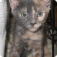 Adopt A Pet :: Loma - Harriman, NY