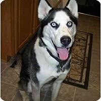 Adopt A Pet :: Merlin--Pending! - Belleville, MI