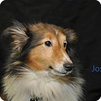 Adopt A Pet :: Jose - COLUMBUS, OH