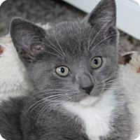 Adopt A Pet :: Peggy - Irvine, CA