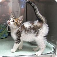 Adopt A Pet :: Herbie - Athens, GA