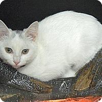 Adopt A Pet :: GoGo - The Colony, TX