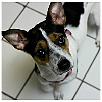 Adopt A Pet :: Mila - Forked River, NJ