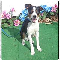 Adopt A Pet :: RASKEL - Marietta, GA