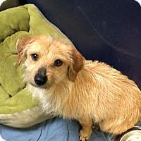 Adopt A Pet :: Huckleberry - Custer, WA