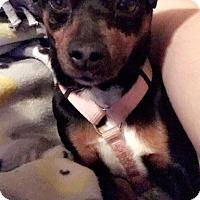 Adopt A Pet :: Wheeler - Garden City, MI