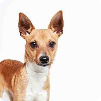 Adopt A Pet :: SHAN YU - Murray, UT