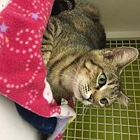 Adopt A Pet :: Sara - San Antonio, TX