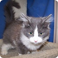 Adopt A Pet :: K-Yvonne5-Tobin - Colorado Springs, CO
