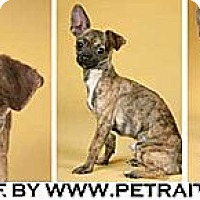 Adopt A Pet :: Prince - Chicago, IL