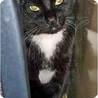 Adopt A Pet :: Chickie - Secaucus, NJ