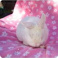 Adopt A Pet :: Rian - Santee, CA