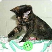 Adopt A Pet :: Hoda - Winter Haven, FL