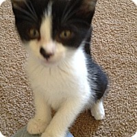 Adopt A Pet :: Kitsy - Monroe, GA