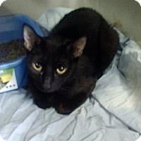 Adopt A Pet :: Azlyn Rae - Willington, CT