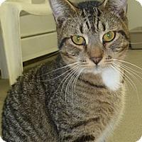 Adopt A Pet :: Maurice - Hamburg, NY