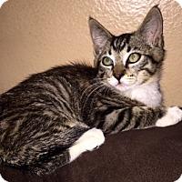 Adopt A Pet :: Philip - North Highlands, CA