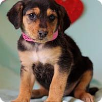 Adopt A Pet :: Kelli - Waldorf, MD