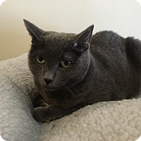 Adopt A Pet :: Mya - Spring Brook, NY