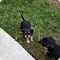 Adopt A Pet :: Wren - Fort Atkinson, WI