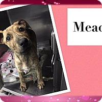 Adopt A Pet :: Meadow - Ringwood, NJ