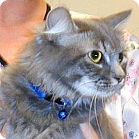 Adopt A Pet :: Frances - Wildomar, CA