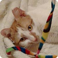 Adopt A Pet :: Nala - New  York City, NY
