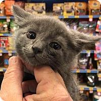 Adopt A Pet :: EMMA - Lawton, OK