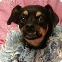 Adopt A Pet :: CoCo - Murphy, NC