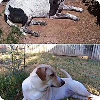 Adopt A Pet :: Toca & Lucky - Gilbert, AZ