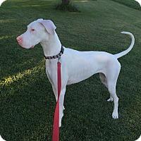 Adopt A Pet :: Marigny - Springfield, IL
