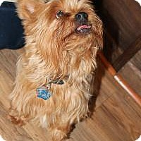 Adopt A Pet :: Chewy - Howell, MI