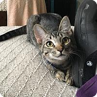 Adopt A Pet :: Fargo sad story - Studio City, CA