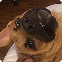 German Shepherd Dog Mix Dog for adoption in Yakima, Washington - Kilo