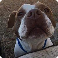 Adopt A Pet :: Reese - Greenville, NC