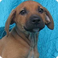 Adopt A Pet :: Garrett Jenkins - Cuba, NY