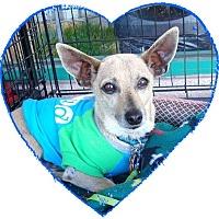 Adopt A Pet :: Tibbs - Las Vegas, NV