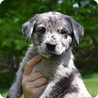 Adopt A Pet :: COME MEET Hickory - Westport, CT