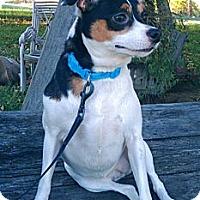 Adopt A Pet :: Anna - Boise, ID