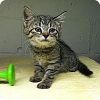 Adopt A Pet :: Charlie - Island Park, NY