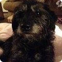 Adopt A Pet :: Sterling - Alliance, NE