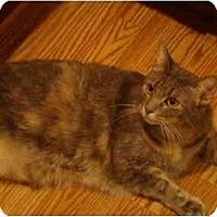 Adopt A Pet :: Gwen - Muncie, IN