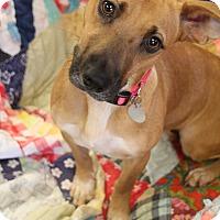 Adopt A Pet :: Layla - Marietta, GA