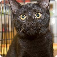 Adopt A Pet :: Logan - Irvine, CA