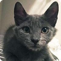 Adopt A Pet :: Wella - Austin, TX