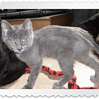 Adopt A Pet :: NATASHA - Medford, WI