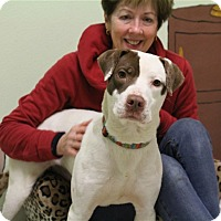 Adopt A Pet :: Louie - Elyria, OH