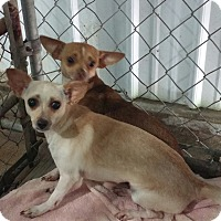 Adopt A Pet :: 2 chi - Paris, IL